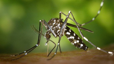 los-mosquitos
