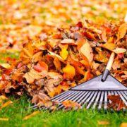 04550-limpiar-jardin-hojas-secas_l