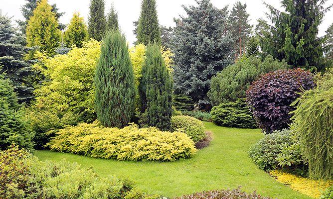 Servicio integral de mantenimiento de jardines y piscinas for Coniferas de jardin